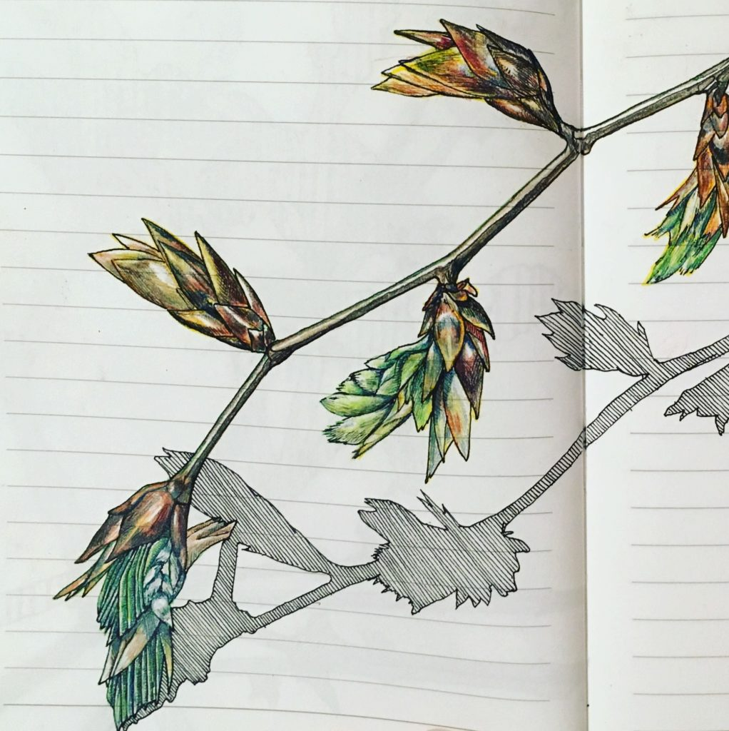 Drawing by Jo Beal