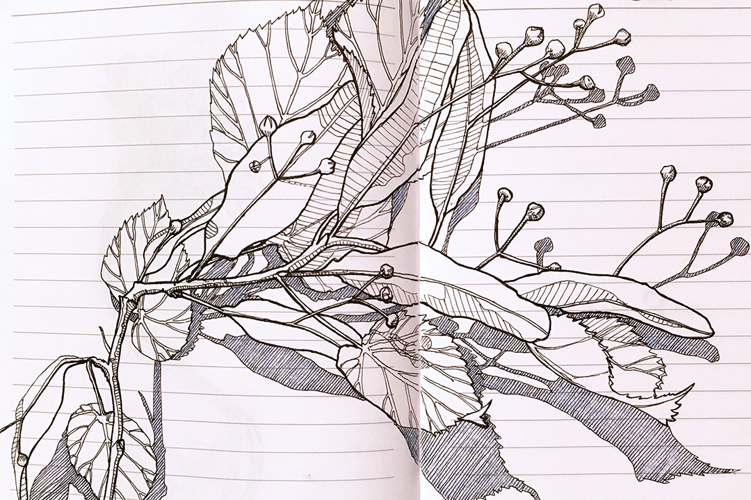 Sketch by Jo Beal