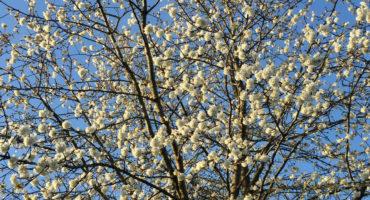 Spring blossom photo by Ali Pretty