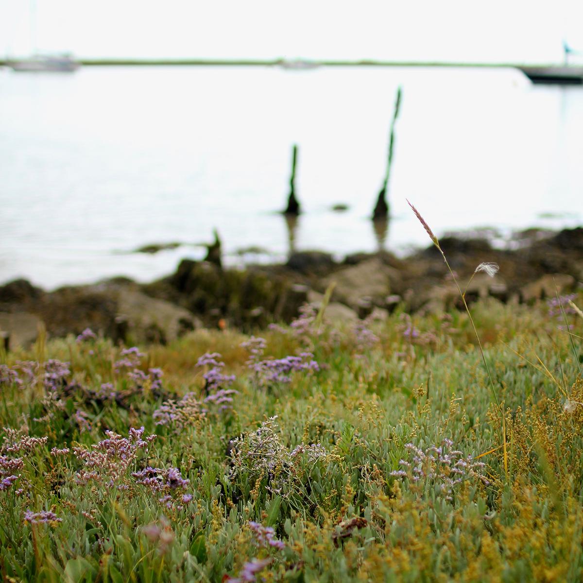 Mile 70 Woodbridge marshes by Lucinda Devenish