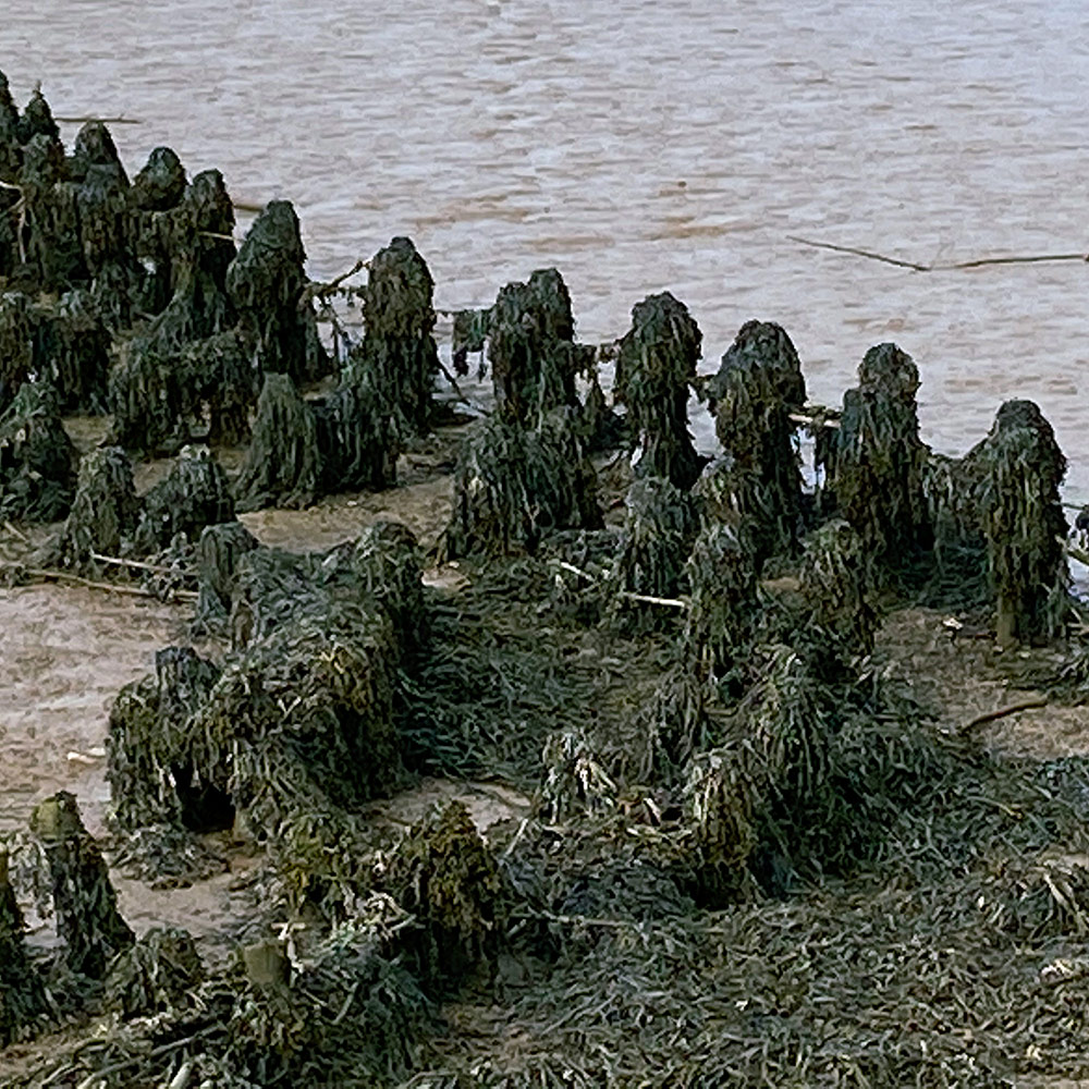 Mile 67 by Sonya Park Seaweed covered structures on the shores of Orford Ness