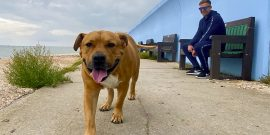 Bear the dog on Canvey credit Kevin Rushby