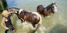 Horses at Hullbridge credit Kevin Rushby