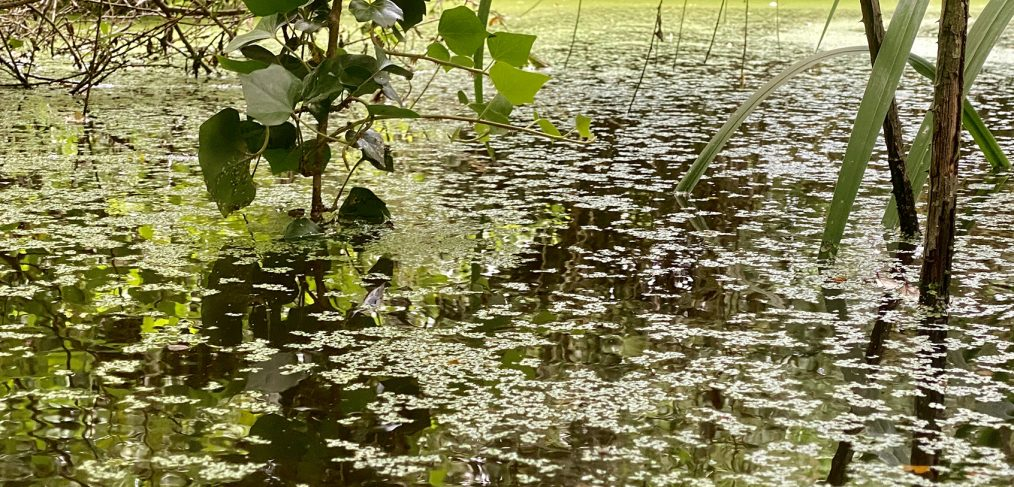 Part of Capability Brown's Serpentine pond at Little Belhus credit Kevin Rushby
