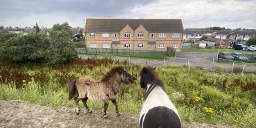 Horses on the edge of Tilbury credit Kevin Rushby